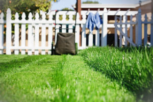 grass-cutting-services-muswell-hill
